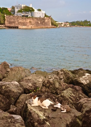 """Kitty Paradise"" - Puerto Rico"