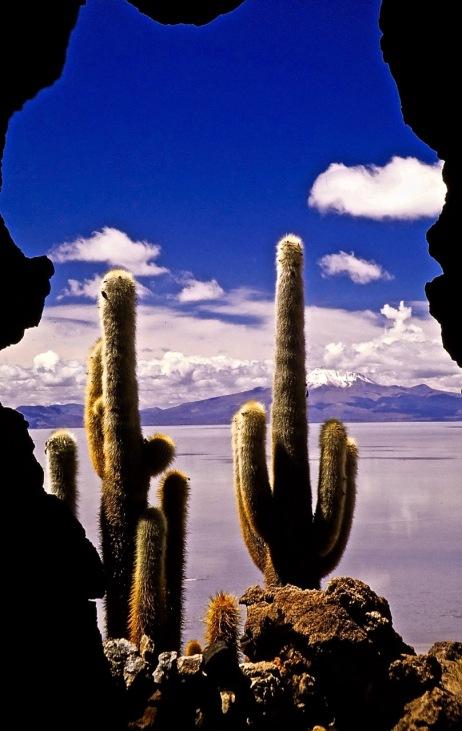 """Salt Flat Sentinels"" - Bolivia"
